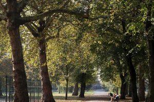 Royal Victoria Gardens, avenue of trees
