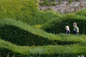 Thames Barrier Park sculptural hedges