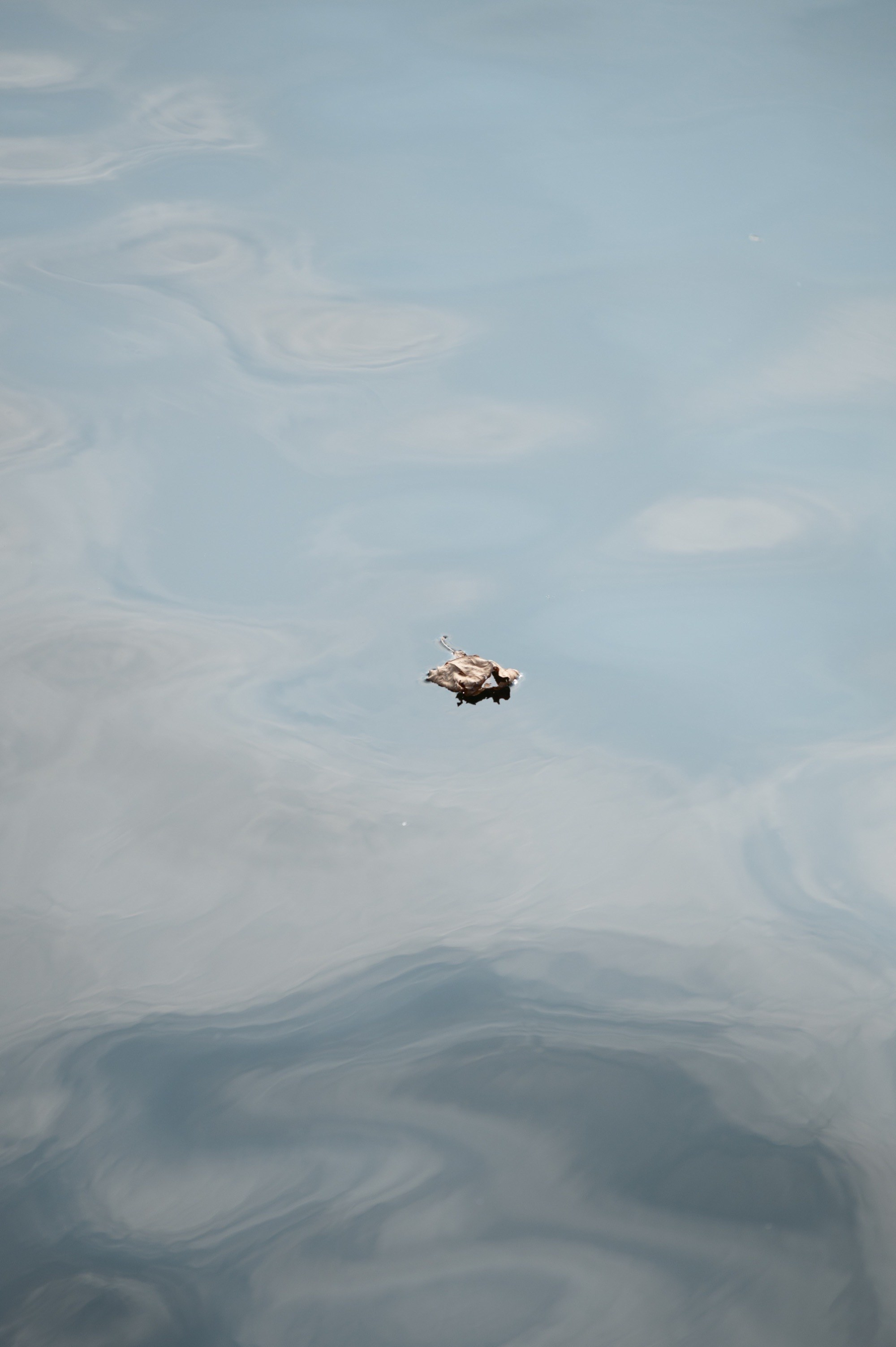 A lone leaf on the water
