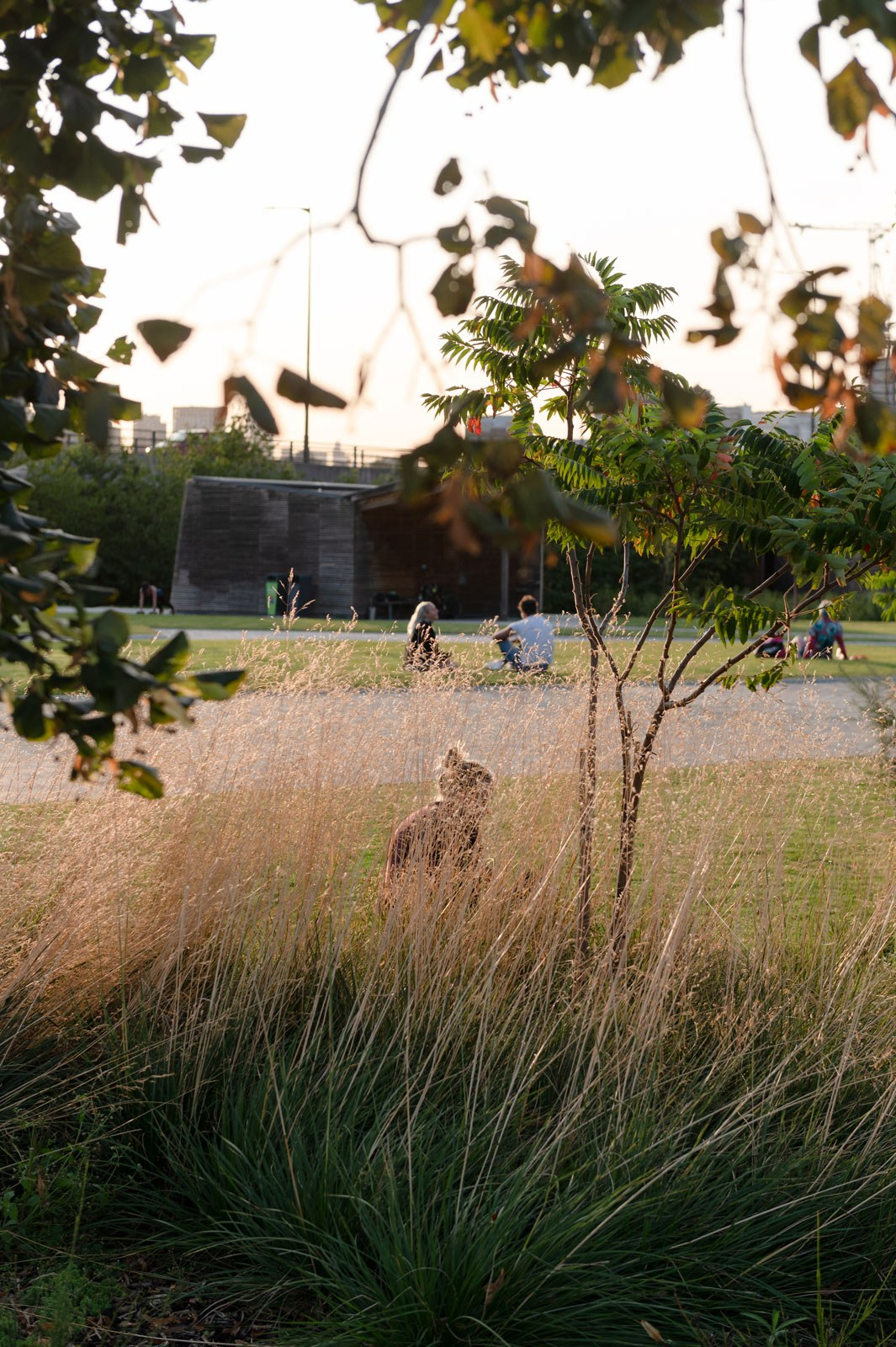 A woman sitting in the tall grass of the Thames Barrier Park