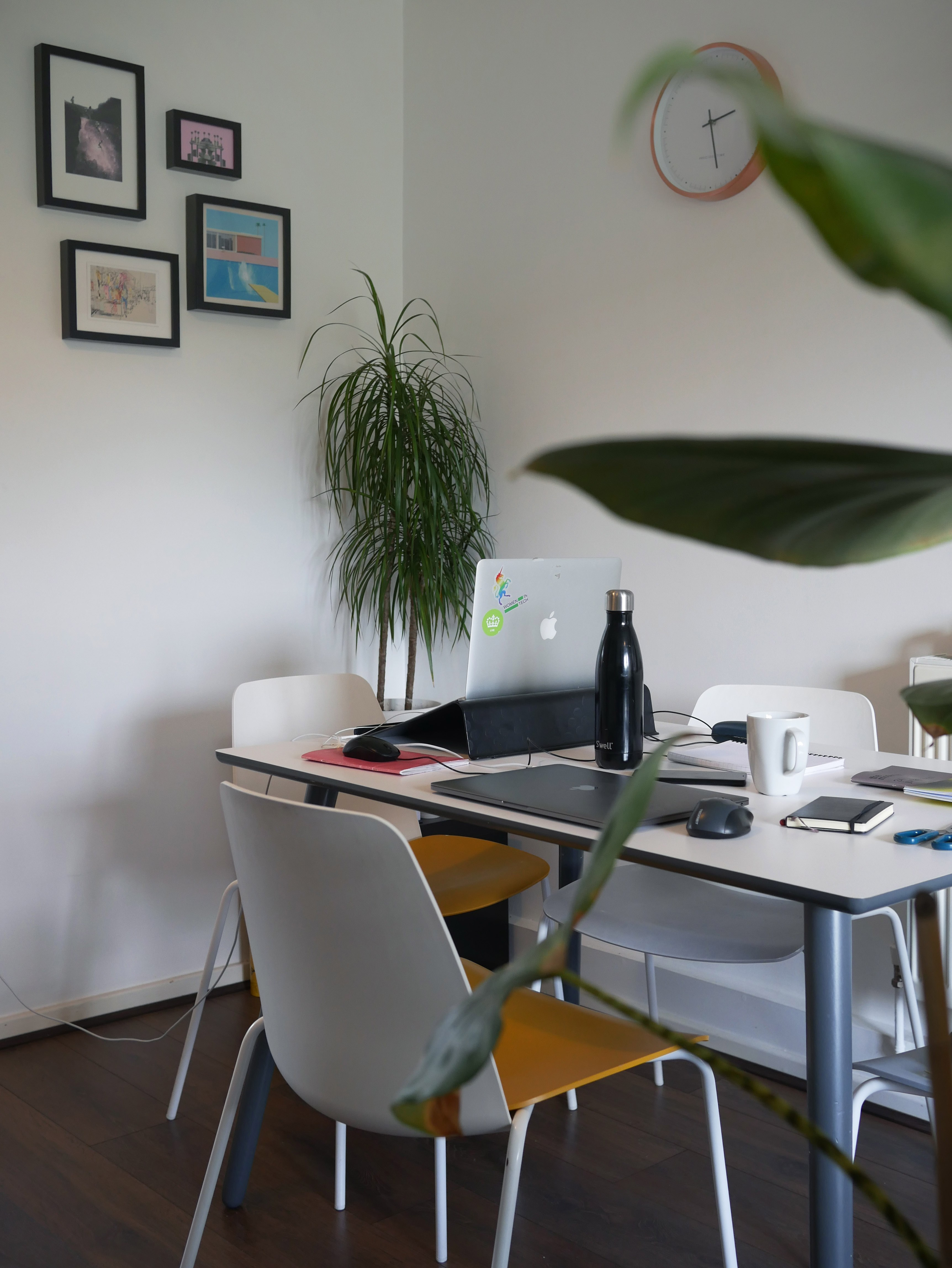 Peaceful desk with potted plants