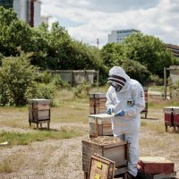 Meet the bees at Silvertown Quays