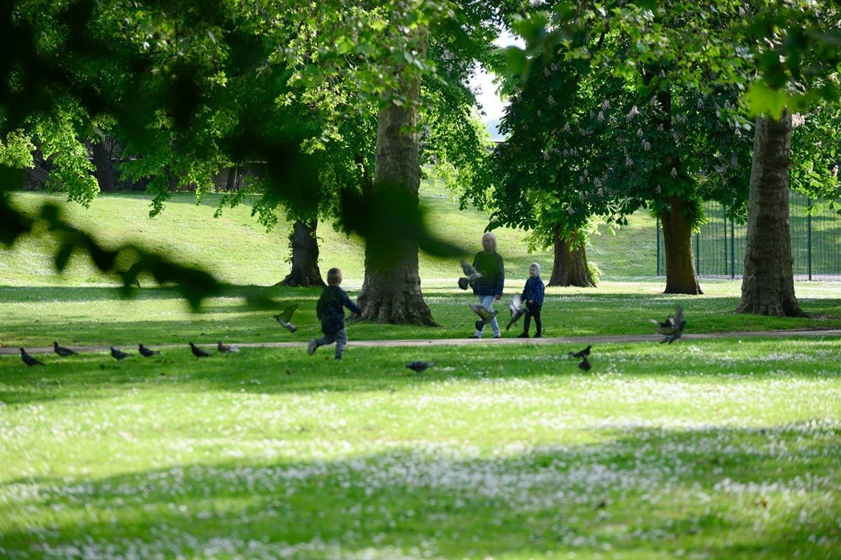 Pigeons in Beckton park